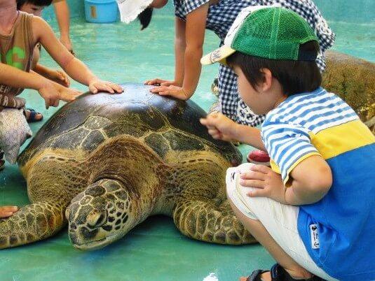 ウミガメとふれあおう!岡山県下唯一の水族館♪