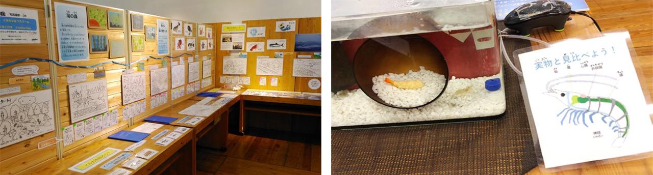展示コーナー「もっと知りたい!海の生きもの」を開設