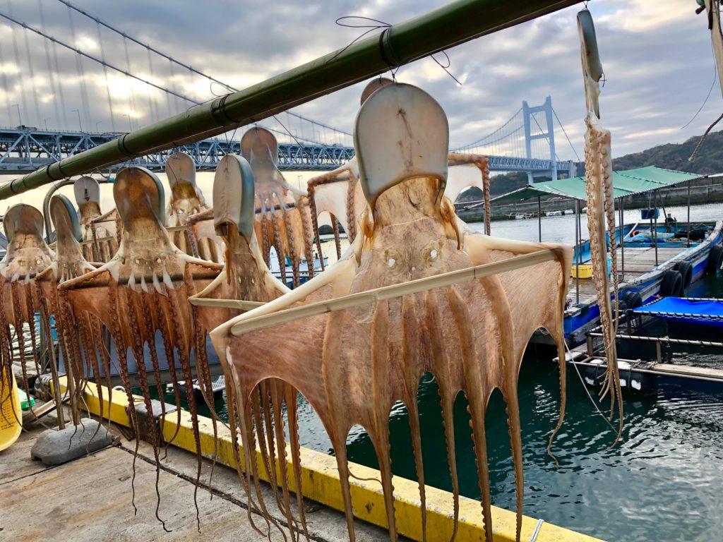 漁師町・下津井の冬の風物詩「干しダコ」