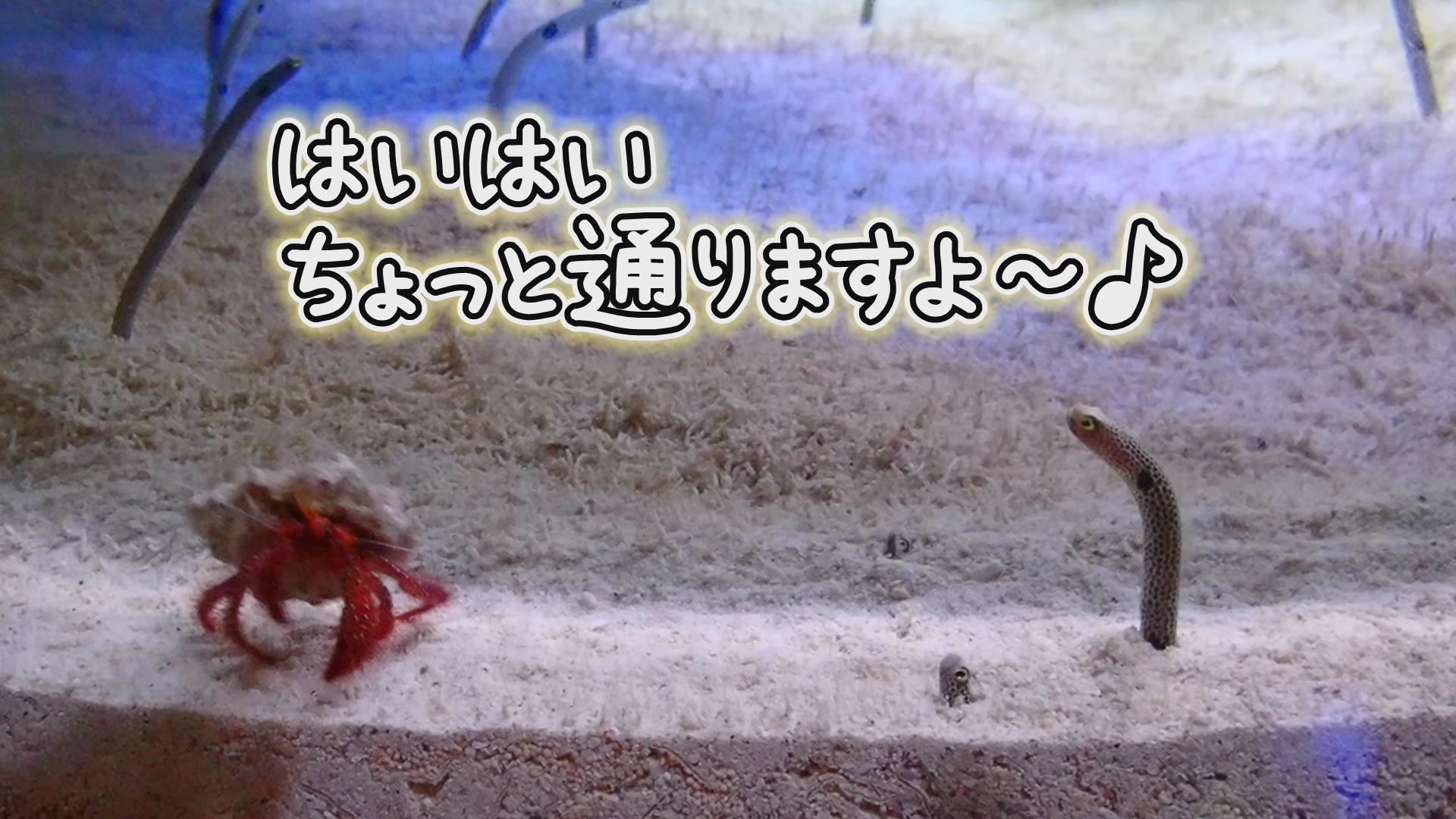 『はいはいちょっと通りますよ〜♫』いおワールド かごしま水族館×海と日本PROJECT in 鹿児島