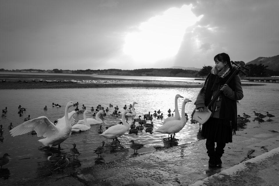 冬の風物詩、白鳥が飛来する青森・浅所海岸で渾身の一枚をパチリ