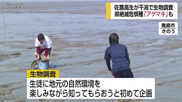 絶滅危惧種も発見!高校生が泥んこ姿で有明海の生物調査